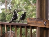Happy Guesta and Happy Birds at Tamborine Mountain B&B