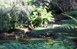 Botanic Gardens on Mt Tamborine