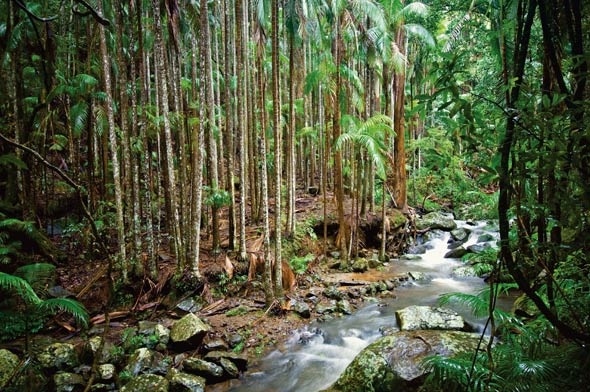 Waters Flowing on Tamborine Mountain