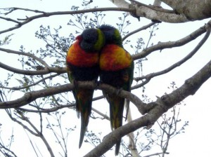 Romantic birds thankful that they survived the storm