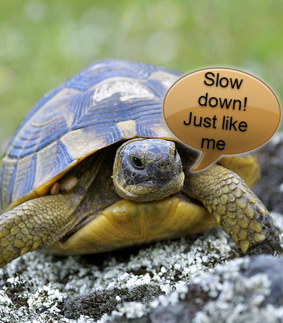 tortoise going slow