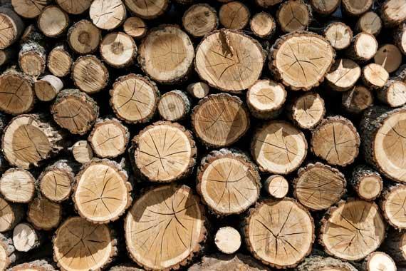 large-pile-firewood-tamborine-mountain-bandb