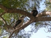 Lovely Kookaburras at Tamborine Mountain Bed and Breakfast