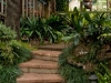 Garden steps leading to Tamborine Mountain Bed and Breakfast
