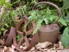 Old pots in the garden at Tamborine Mountain Bed and Breakfast