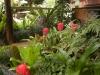 Tamborine Mountain B&B Autumn Gardens3