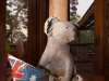 A Proudly Australian Koala at Tamborine Mountain Bed and Breakfast