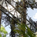 view-from-the-rainforest-skywalk-on-mount-tamborine